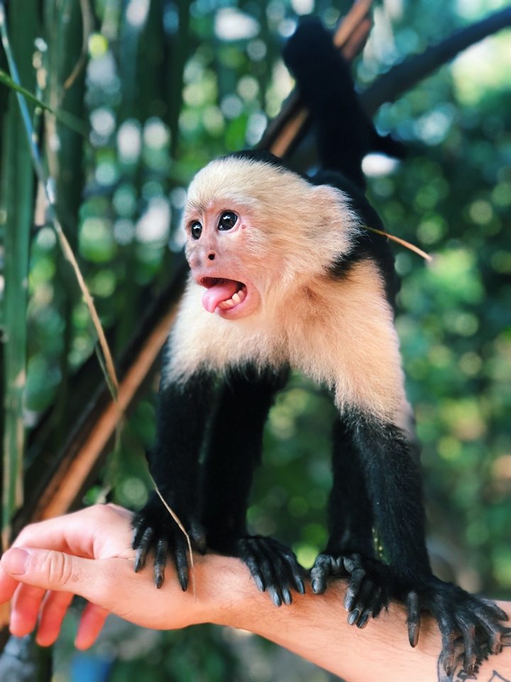 Theme Park Society: Trentham Monkey Forest Trip